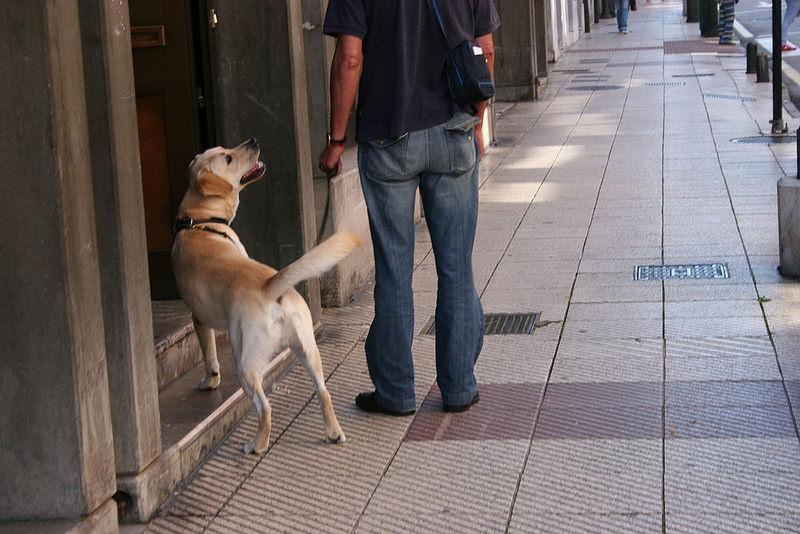 mascota en la Comunidad de Vecinos
